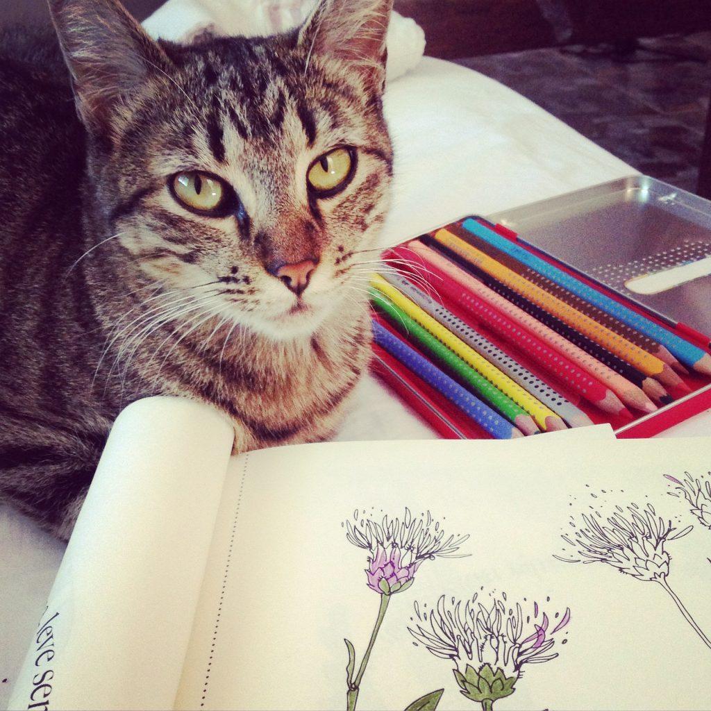 livre coloriage adulte